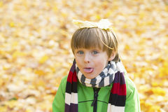 Boy in park in the fall Stock Image