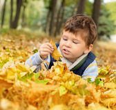 Boy in park. Portrait of happy boy lying on fall leaves in park Stock Photo