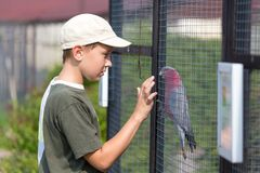 Boy and parrot Royalty Free Stock Photography