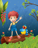 A boy and a parrot in the woods Stock Images