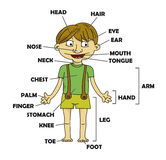 Boy, parts of the body,vector. Parts of the body on a boy in green clothes, vector Royalty Free Stock Photos