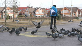 Boy passing on skateboards flocks of pigeons. VELIKIY NOVGOROD, RUSSIA - MART 22, 2017: Boy passing on skateboards flocks of pigeons eating millet in the urban stock footage
