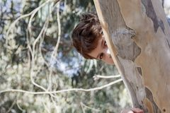The boy peeks out from behind a tree trunk. The boy peeks out from behind an eucalyptus tree trunk stock image