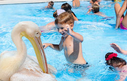 The boy and a pelican Royalty Free Stock Photos