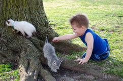 Boy and pet kittens Royalty Free Stock Photography