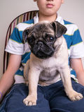 Boy with pet Pug Puppy Stock Images
