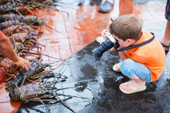 Boy photographing at seafood market. Cute little boy photographing at seafood market Stock Images