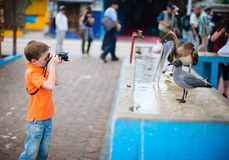 Boy photographing at seafood market Royalty Free Stock Photos