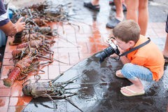 Boy photographing at seafood market Royalty Free Stock Image