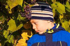 Boy picked grapes Stock Photos