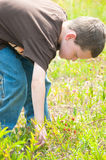 Boy picking berries Royalty Free Stock Images