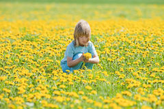 Boy picking dandelions Stock Images