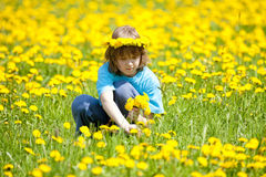 Boy Picking Dandelions on a Meadow Stock Photos