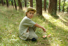 Boy picking mushrooms in a forest. Royalty Free Stock Images
