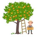 Boy picking oranges royalty free illustration