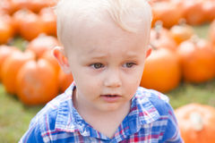 Boy Picking a Pumpkin Stock Photos