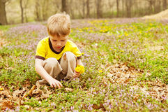 Boy picking Spring flowers Stock Images
