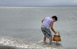 Boy Picking-up Shells on a Beach Stock Photo