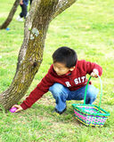 A boy picks up Easter eggs Stock Photography