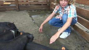 Boy at pig farm stock video footage