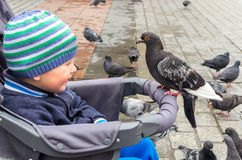 Boy and pigeon Stock Photo