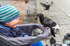Boy and pigeon Royalty Free Stock Image
