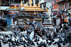 Boy and pigeons Stock Image