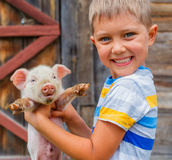 Boy with piglet. Young farmer - cute boy holding white piglet on a farm Stock Photos