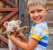 Boy with piglet stock photos