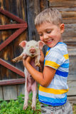 Boy with piglet Royalty Free Stock Image