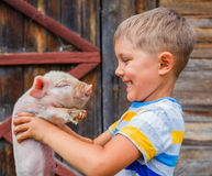Boy with piglet Royalty Free Stock Photo