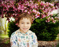 Boy Pink Blossoms Stock Photography