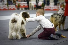 Boy placing his dog for the contest royalty free stock photography