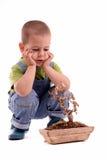 Boy and plant Stock Photos