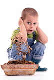 Boy and plant Royalty Free Stock Photos