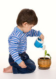 Boy & plant Royalty Free Stock Photo