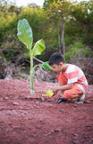 Boy plant tree Royalty Free Stock Photo