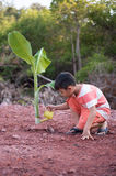 Boy plant tree Stock Photos