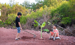 Boy plant tree Stock Images