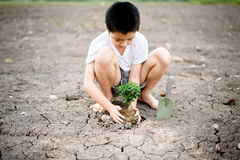 Boy planting on crack soil Royalty Free Stock Images