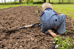 Boy planting garden tomatoes Stock Photography
