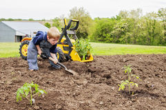 Boy planting tomatoes toy tractor Stock Photography
