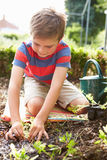 Boy Planting Seedlings In Ground On Allotment Royalty Free Stock Photography