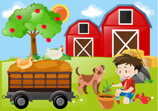 Boy planting tree in the farm Stock Images