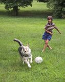 Boy play with dog. On the green grass Royalty Free Stock Photography