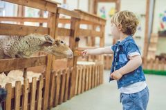 Boy play with the lamb on the farm.  Royalty Free Stock Photos