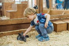 Boy play with the rabbits Stock Photography