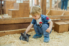 Boy play with the rabbits Royalty Free Stock Photography