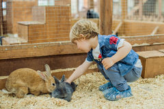 Boy play with the rabbits. In the petting zoo royalty free stock photo