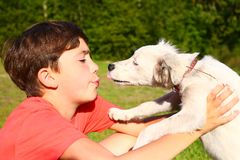 Boy play with white puppy on the summer country background Stock Photography